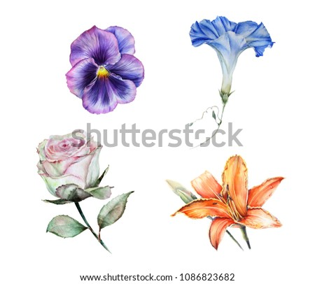 Watercolor set of isolated garden flowers: blue morning glory, orange lily, green rose