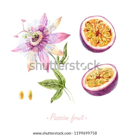 Watercolor set of isolated illustrations. Botanical drawing, passion fruit flower plant and fruit. Seed and slice