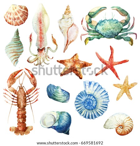 Watercolor set of isolated objects sea shells, starfish, squid, crab and cancer