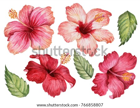 Watercolor set of pink and red flowers, illustration of hibiscus and leaves, hand drawn floral elements isolated on a white background.