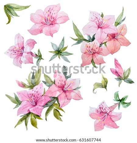 Watercolor set of pink azalea flowers and leaves, rhododendron