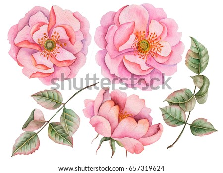 Watercolor set of rosehip flowers, hand drawn illustration of wild roses and leaves isolated on white background.
