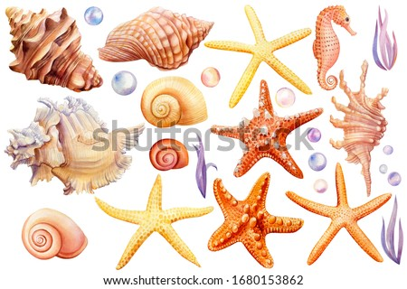 Watercolor set of seashells, seahorse, starfish, bubbles, seaweed on an isolated white background, hand drawing, summer sea clipart