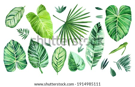 Watercolor set of tropical leaves on white background. Philodendron leaves, calathea, palm leaves, scindapsus leaves. Hand drawn botany set. Illustration for wrapping paper, menu, invitation, decor