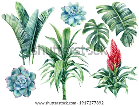Watercolor set succulents, palm leaves, monstera, dracaena, bromelia flower on isolated white background