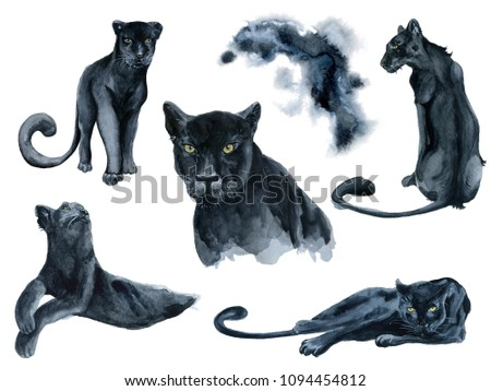Watercolor set with black panthers animals collection Hand drawn illustration