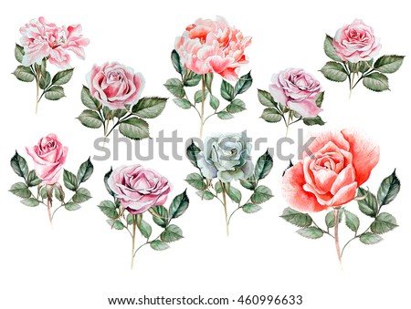Watercolor set with different roses. Illustration