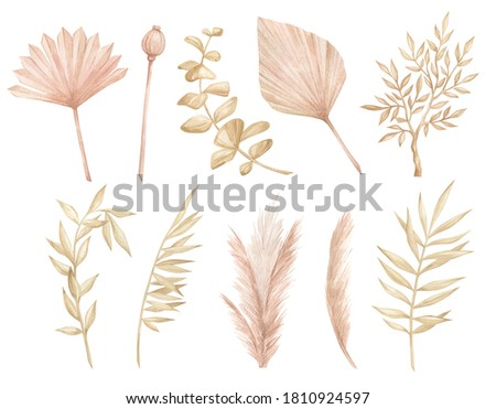 Watercolor set with dried foliage, leaves, bud, pampas, branches in vintage style. Boho decorative floral elements. Hand painting isolated palm summer leaf in vintage style. Nature elements.