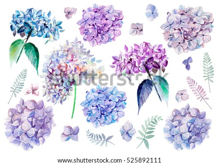 Watercolor set with flowers hydrangeas. Illustrations.