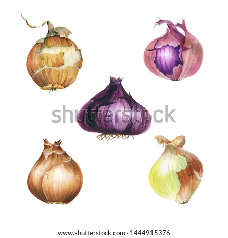 Watercolor set with isolated riped onion blulbs. Eco friendly. Vegetables clipart. Healthy food