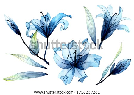 watercolor set with transparent flowers and leaves. transparent blue lilies in pastel colors. elements isolated on white background. design for wedding Stockfoto ©