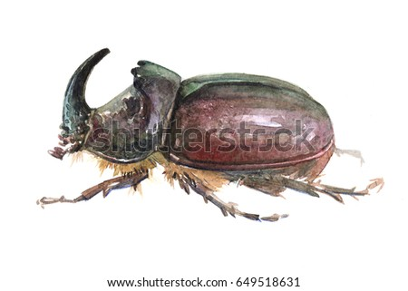 Watercolor single rhinoceros beetle insect animal isolated on a white background illustration.