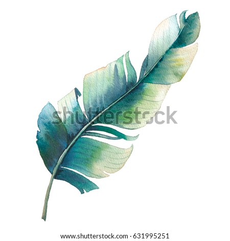 Watercolor single tropical leaf. Hand painted exotic banana palm branch isolated on white background. Botanical illustration