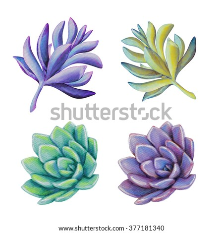 watercolor succulents clip art, decorative design elements set, floral illustration isolated on white background