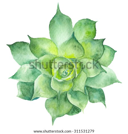 Watercolor Sukkulent Painting | Hand-painted drawing with green tropical plant isolated on white background, Sempervivum botanical illustration