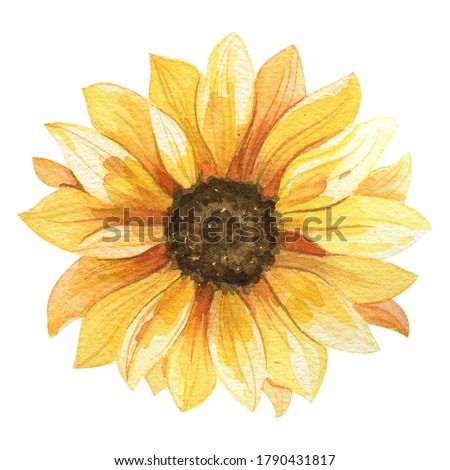 Watercolor sunflower hand painted illustration, perfect for wedding invitation, greeting card, fabric, textile, wallpaper, ceramics, branding, web design, stationery, cosmetic, social media, scrapbook