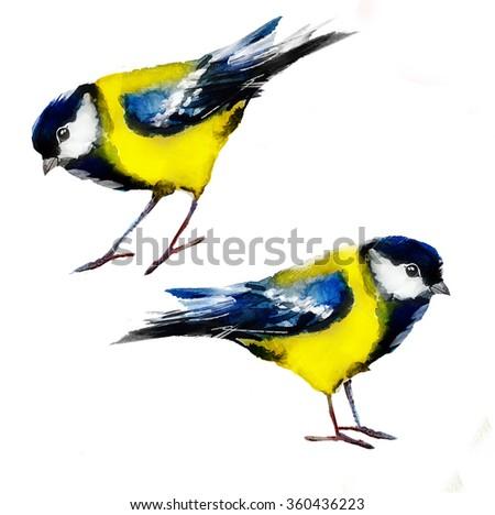 watercolor tits