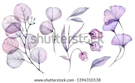 Watercolor Transparent floral set isolated on white collection of roses, bellflower, buds, leaves, branches bundle in pastel pink, grey, violet, purple, botanical illustration wedding design Photo stock ©