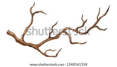 Watercolor tree, branch. Isolated on white background. Hand painting on paper Foto stock ©