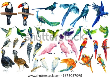 watercolor tropical birds, toucan, macaw, parrot, cockatoo, kookaburra, hummingbird, white isolated background, hand drawing stock photo