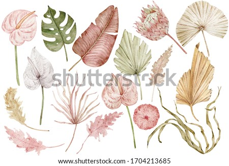 Watercolor tropical clipart with palm leaves, protea and anthurium flowers, dried grass. Exotic set of natural leaves and flowers. Hand-drawn illustration isolated on the white background.