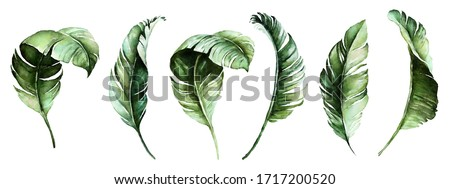 Watercolor tropical floral illustration set with green leaves for wedding stationary, greetings, wallpapers, fashion, backgrounds, textures, DIY, wrappers, postcards, logo, etc.