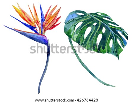 Watercolor tropical flower, jungle leaf, bird of paradise flower. Hand drawn exotic illustration isolated on white background