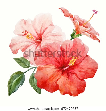 Watercolor tropical flower red and delicate pink hibiscus with leaves and bud, flowery Hawaiian composition