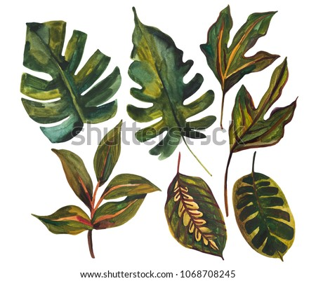 Shutterstock Watercolor tropical leaf set. Drawing of unusual leaves isolated on white background. Hand painted exotic leaves illustration.