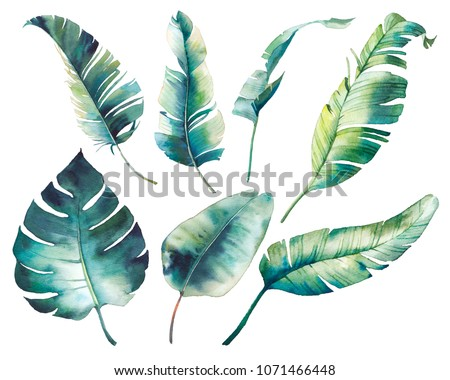 Watercolor tropical leaves: monstera, rubber plant, banana palm. Botanical illustration of exotic flora. Isolated objects on white background