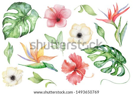 watercolor tropical plants set. Exotic flowers, monstera and palm leaves, botany elements