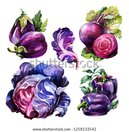 Watercolor vegetable set, organic ingredients. Cabbage, sweet peppers, eggplant and beets. Hand draw raw food illustration on white background. It can be used for menus, dishes and for packing seeds.