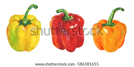 Watercolor vegetables set on white background. Hand drawn isolated fresh yellow, orange, red pepper paprika