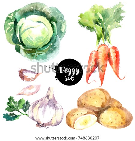 Shutterstock Watercolor vegetables set. Painted isolated natural organic fresh eco food illustration on white background. Veggies design of  carrots, cabbage, garlic, potatoes
