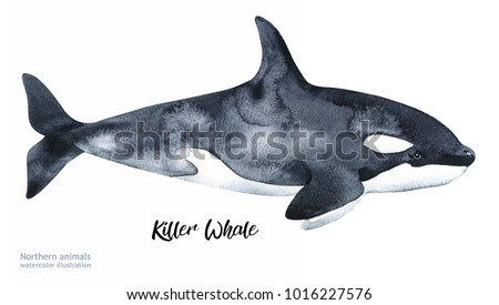 Stock Photo Watercolor Whale hand painted  illustration isolated on white background. Realistic underwater animal art.