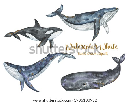 Watercolor whales clipart, Sea and ocean underwater animals set, killer whale, sperm whale, blue whale, humpback whale hand drawn illustration