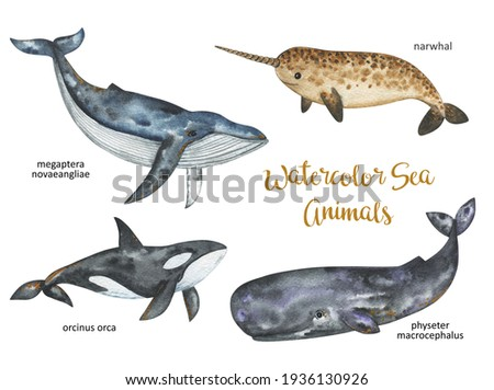 Watercolor whales set, Sea and ocean animals clipart, narwhal, killer whale, sperm whale, blue whale, Undersea world hand drawn illustration