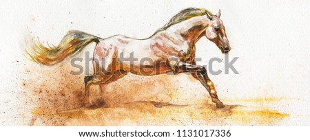 Watercolor white horse runs galloping. Hand drawn beautiful arabian, mustang, thoroughbred stallion on white background. Painting animal illustration