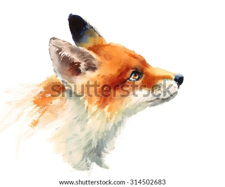 Watercolor Wild Animal Red Fox Looking Up Side View Hand Drawn Portrait Illustration isolated on white background