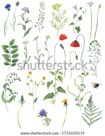 Watercolor Wild Flowers and Plants Clipart. Floral illustration. Botanica elements. Spring Summer Flower Clipart. It can be used for postcard, scrapbook, website, invitation. Foto d'archivio ©