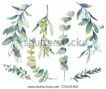 Watercolor winter plants set. Hand drawn botanical elements isolated on white background. Branches with berries, eucalyptus, mistletoe for modern natural design Foto stock ©