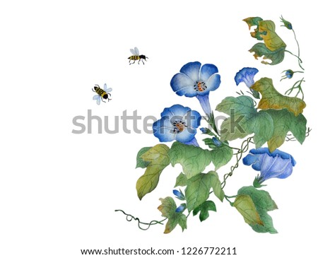 Watercolor with a flowering branch ipomoea. Beautiful blue flowers of morning glory, bees are fly near. Illustration executed in traditional сhinese style, isolated on white background.
