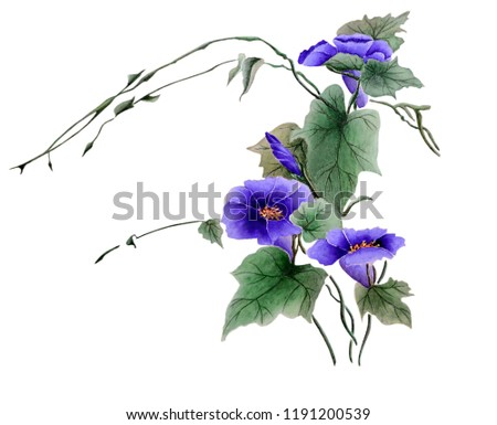 Watercolor with a flowering branch ipomoea. Beautiful purple flowers of morning glory. Illustration executed in traditional сhinese style, isolated on white background.