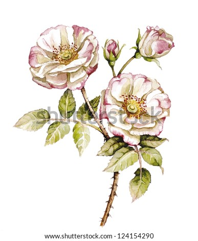 Watercolor with branch of roses
