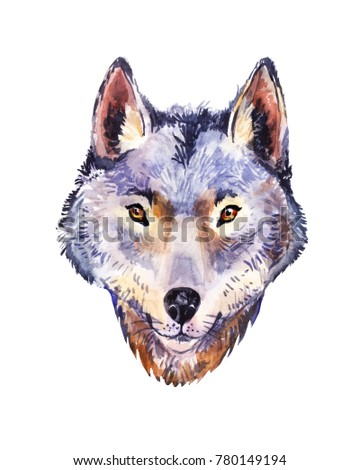 Watercolor wolf, portrait of wild animal. Illustration isolated on white.