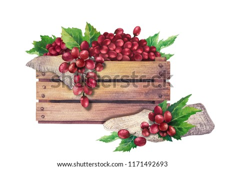 Watercolor wooden box of red grapes decorated with leaves and sackcloth. Hand painted illustration isolated on white background