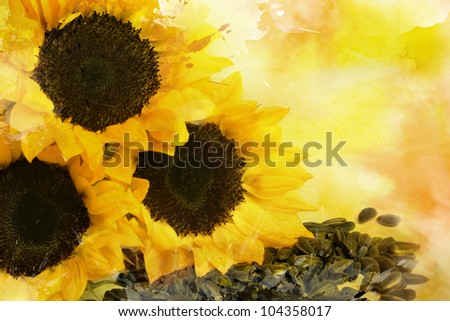Watercolor yellow sunflowers and sunflower seeds, for backgrounds or textures
