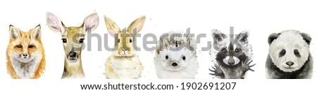 Watercolour Animal set. Fox, fawn, rabbit, hedgehog, raccoon and panda. Watercolor illustration on white.