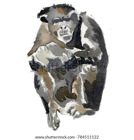 Watercolour chimpanzee illustration