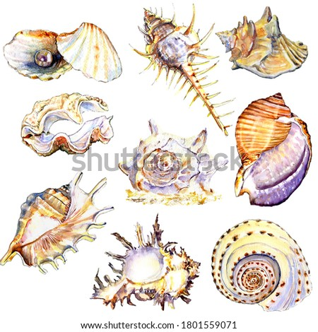 Watercolour colorful sea shells pattern. Conch shell, clam, cockle-shell, fan shell, periwinkle, whelk, sundial, sinistrall shell